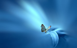 Butterfly-On-Leaf-on-abstract-blue-light-background-by-Josep-Sumalla